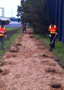 Mulch beds Vic roads PF